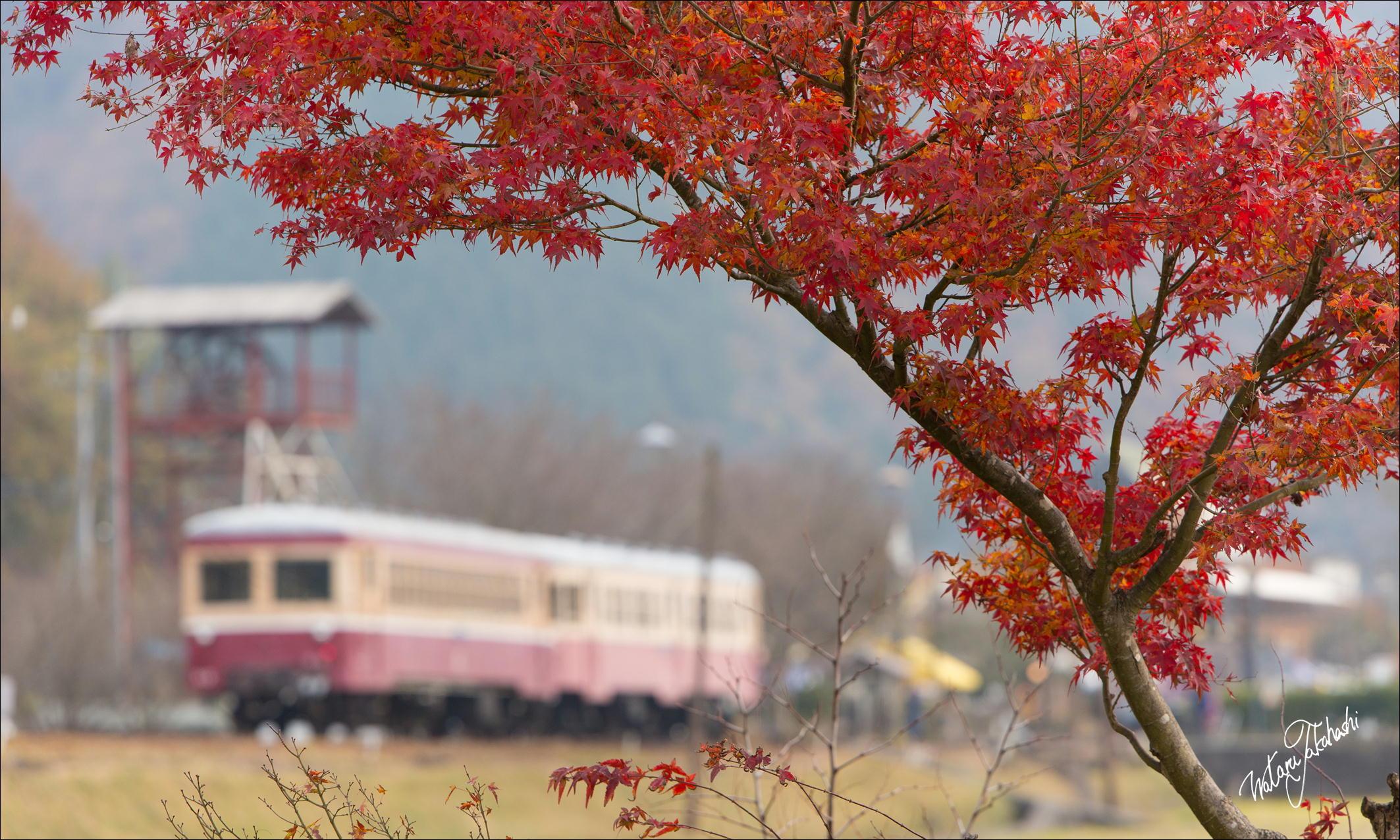 紅葉と一緒にねらう片上鉄道